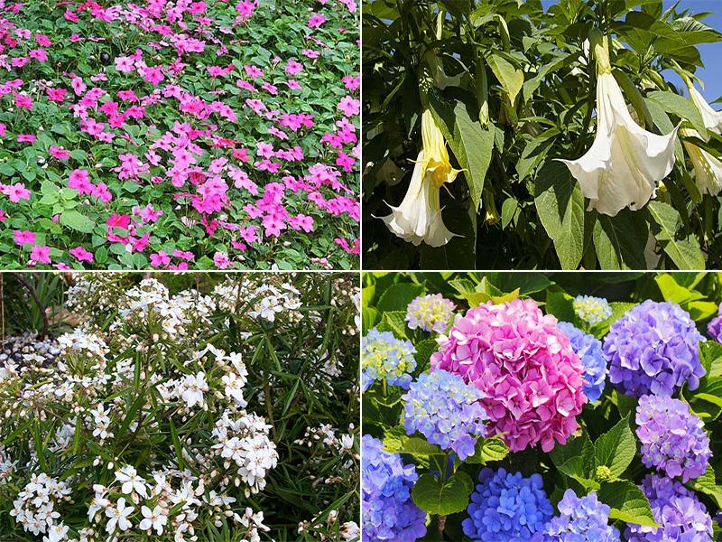 Balkon Tipp Prachtige Unkomplizierte Pflanzen Fur Schattige Platze